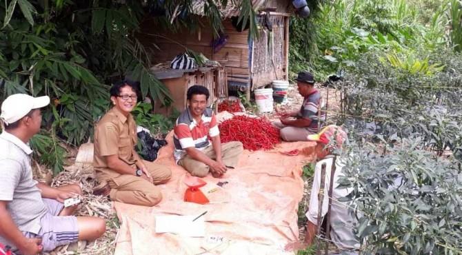 Pengelola TA Payakumbuh saat berdialog dengan petani cabai.