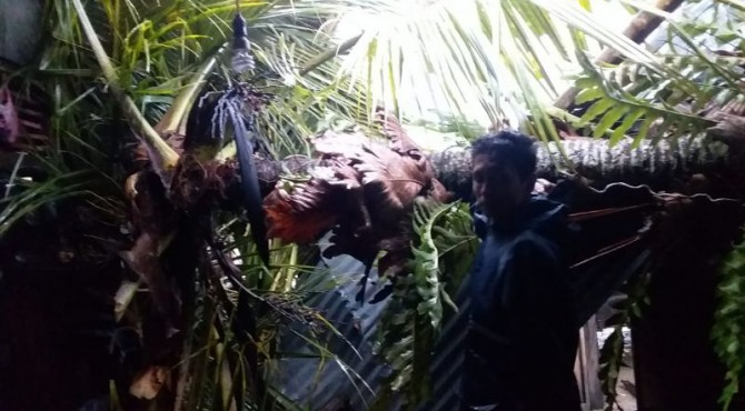 Warga memotong pohon kelapa yang menimpa rumahnya jorong balai akat Nagari persiapan Balun kecamatan KPGD Solsel Minggu (8/9) sekitar pukul 16.30 WIB.