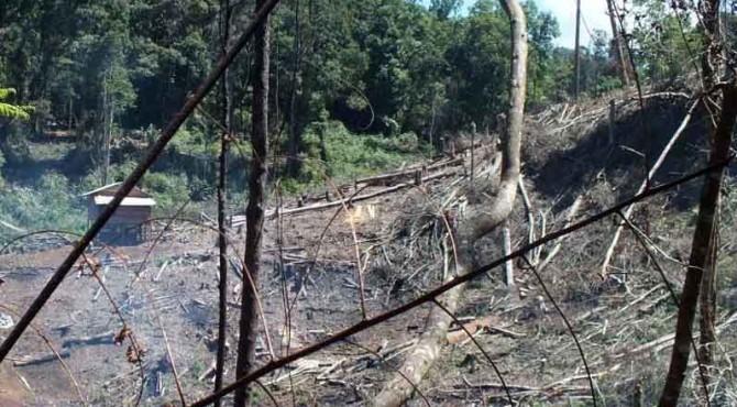 Kondisi hutan di TNKS yang dirambah untuk pembukaan lahan.