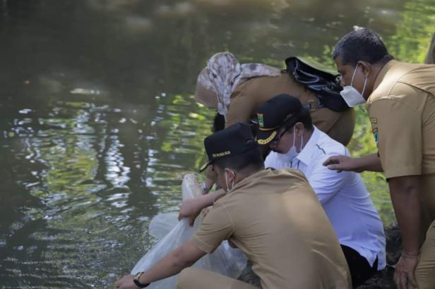 Wawako Solok, Dr. Ramadhani Kirana Putra dan anggota DPRD Sumbar H. Daswippetra Dt. Manjinjiang Alam melepaskan bibit ikan di Batang Gawan