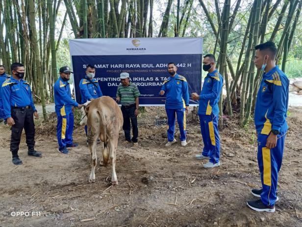 Petugas Pengamanan Wilayah II PT Semen Padang saat akan menyembilh sapi kurban. Setelah disembelih, daging kurban akan disalurkan untuk masyarakat Batu Gadang