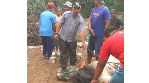 Ketua DPRD Dharmasraya Pariyanto ikut menyaksikan momen pemotongan hewan kurban saat lebaran Idul Adha 2020