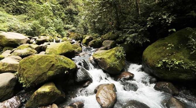 ilustrasi alam pegunungan yang hijau