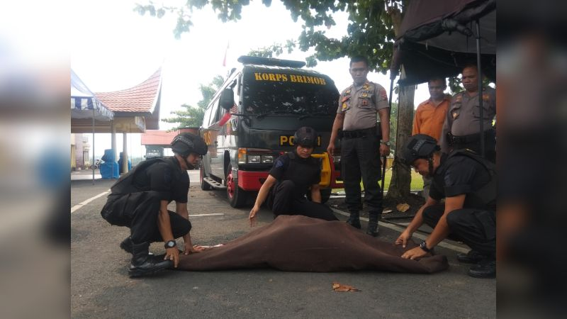 Kasatshabara Polres Sijunjung Iptu Asril Saat Menyerahkan Bahan Peledak ke Tim Gegana Satbrimobda Sumbar