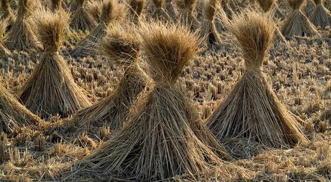 Petani Thailand Manfaatkan Kekuatan e-Comerce untuk Penjualan