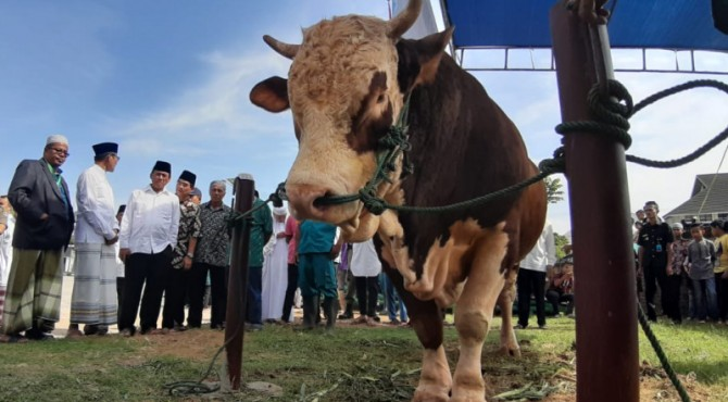 Gubernur Sumbar Irwan Prayitno menyerahkan sapi kurban Presiden Jokowi kepada penita kurban Masjid Raya Sumbar