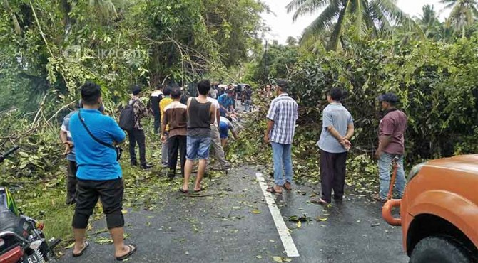 Pohon tumbang di kawasan Ulakan Tapakis, Padang Pariaman tengah dibersihkan BPBD.