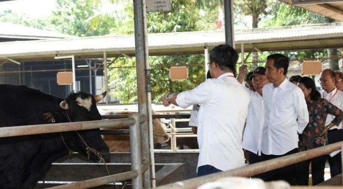 Presiden meninjau peternakan sapi di Bogor