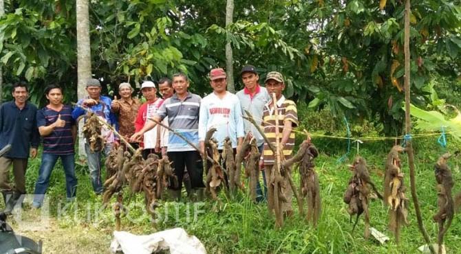Tupai hasil tangkapan di Kelurahan Ompang Tanah Sirah.