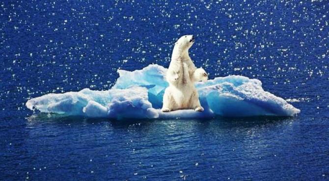 ilustrasi hewan yang terjebak perubahan iklim