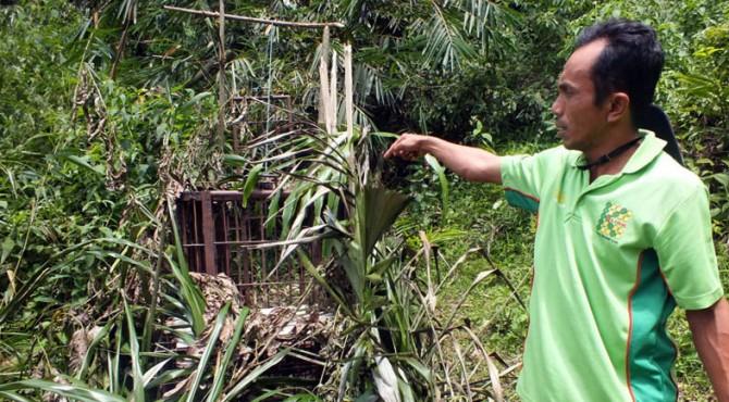 Perangkap harimau yang dipasang antara Jorong Lambeh dengan Palembayan Tangah Kabupaten Agam