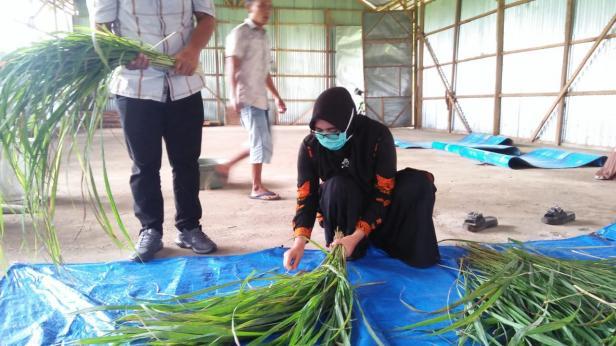 Pembuatan Anti Septik Alami ini dipusatkan dirumah Ibu Liza Fitir di Sukamenanti, Kecamatan Pasaman