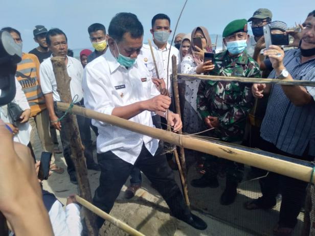 Bupati Pessel, Rusma Yul Anwar saat penanaman cemara laut di di Muaro Anakan Nagari IV Koto Hilie- Batang Kapas.