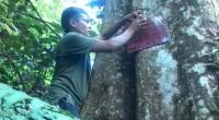 Pemasangan data pemilik pohon asuh.