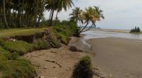 Sudah berlangsung lama begini kondisi abrasj muara yang mengikis kawasan wisata Simpang Tigo Buayo Putieh Teratak-Pesse