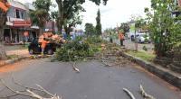 Pemangkasan pohon yang dilaksanakan DLH Kota Payakumbuh.