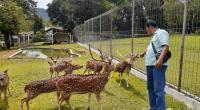Marianto, petugas yang memelihara rusa tutulsedang memberi makan rusa tutul yang diadopsi Semen Padang dari Istana Bogor