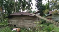 Rusak parah, rumah warga nagari Kotobaru tertimpa pohon tumbang