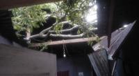 Satu unit rumah yang tertimpa pohon petai di IV Nagari Bayang Utara-Pessel