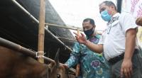 Kunjungan ACT dalam melihat sapi kurban