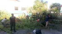 Pohon tumbang di Padang