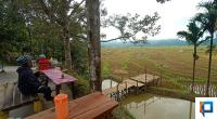 Kafe Viral di Pinggir Persawahan