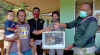 BKSDA Evakuasi Kucing Hutan Dari Rumah Warga