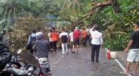 Pohon tumbang di jalan nasional Selayang Padang-Pessel