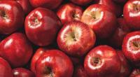 ilustrasi: Apel