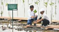 Presiden Jokowi saat menanam Mangrove