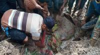 Warga mengevakuasi korban dari dalam tumpukan material longsor