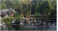 Warga berekreasi ke Taman Margasatwa Ragunan, Jakarta.