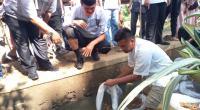 Wali Kota Pariaman lepaskan ikan mas secara simbolis