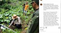 Postingan BKSDA Sumbar terkait penyerangan Beruang Madu di Pessel