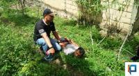 Salah seorang tersangka saat diamankan oleh Tim Gagak Hitam Satresnarkoba Polres Payakumbuh