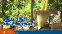 Bunga Bangkai Jadi Objek Wisata Baru di Kambang Pesisir Selatan